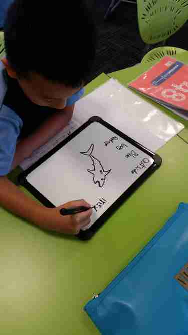 Visible Learning - Year 1/ 2 Zikos